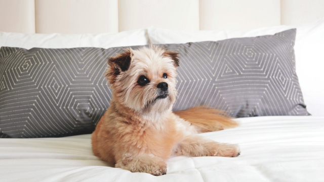 delano-las-vegas-dog-friendly-hotels