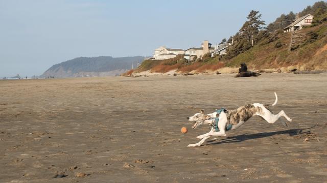 cannon beach dog friendly beaches