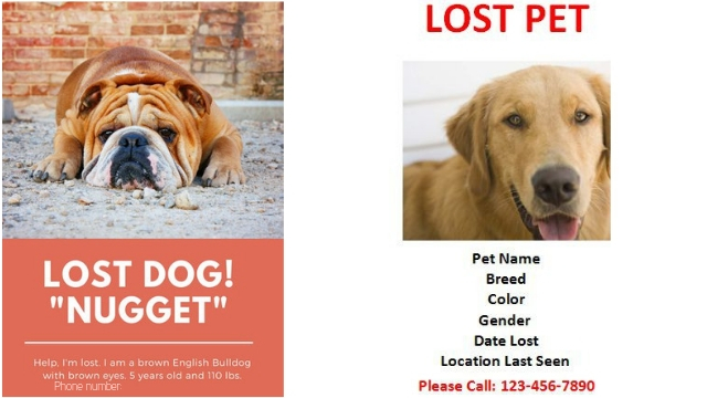 flyer how to find a lost dog