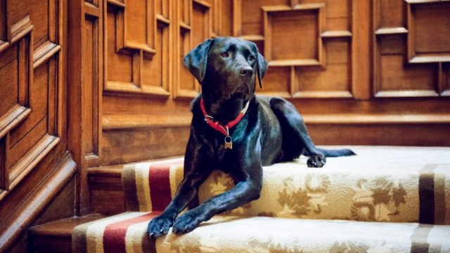 four-seasons-hotel-boston-dog-friendly-hotels