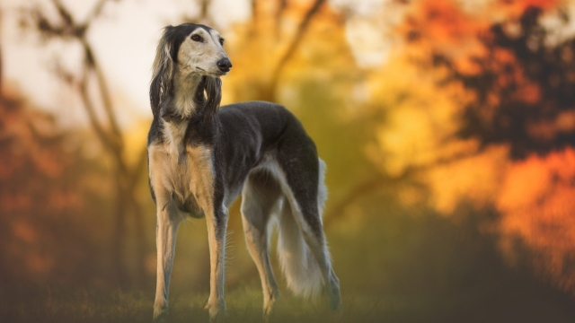 greyhound-best-dogs-for-first-time-owners