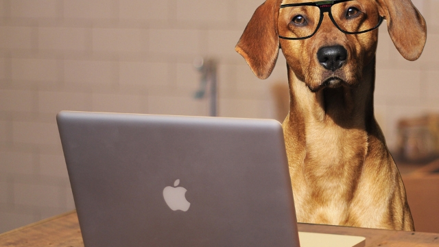 how to find a lost dog on the web