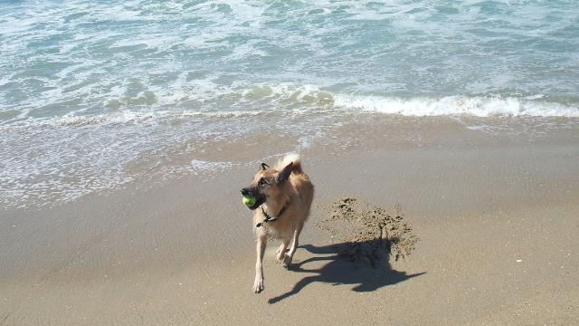 huntington dog friendly beaches