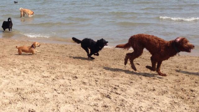 montrose dog friendly beaches