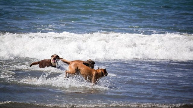 rosies dog beach dog friendly beaches