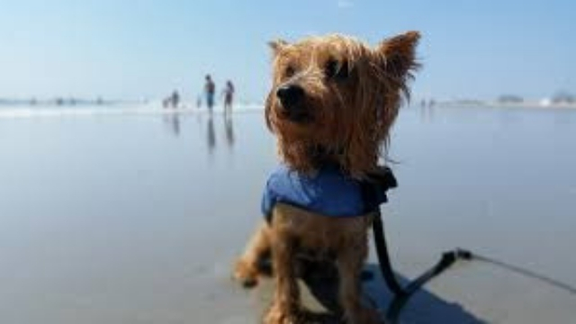 wildwood dog friendly beaches