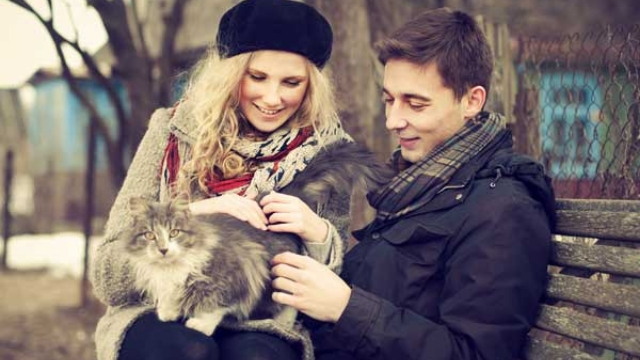 cat improves love benefits of raising a cat