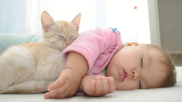 cats help sleeping benefits of raising a cat