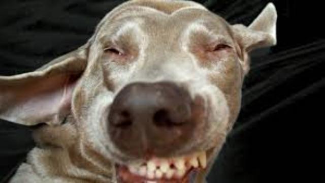 hypoallergenic dogs sneezing