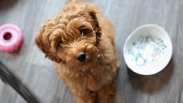 9 Toxic Foods For Dogs You May Not Know