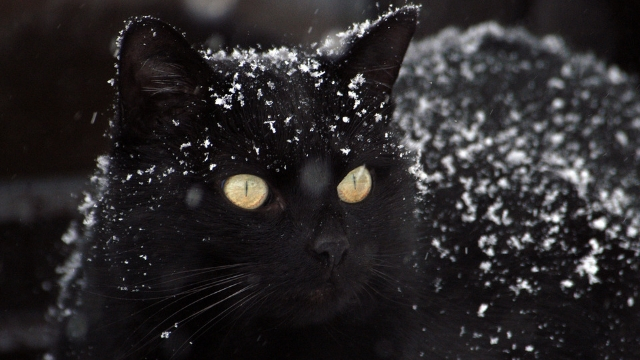black cat superstition are black cats bad luck