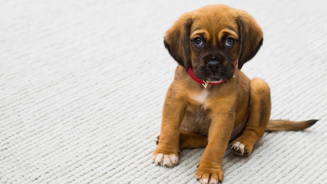Caring For A Pregnant Dog During All Pregnancy Stages