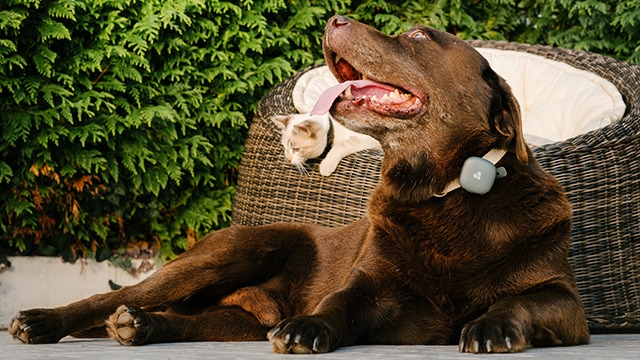 cat-dog-findster-tracker-how-does-a-pet-tracker-work