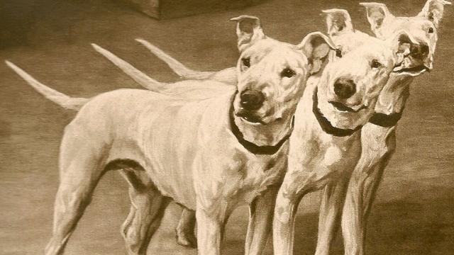 english white terrier extinct dog breeds