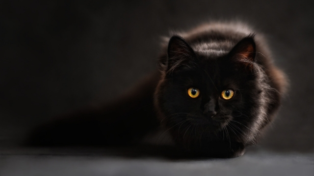 european folklore are black cats bad luck