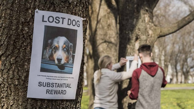 Chances Of Finding A Lost Dog After 24 Hours