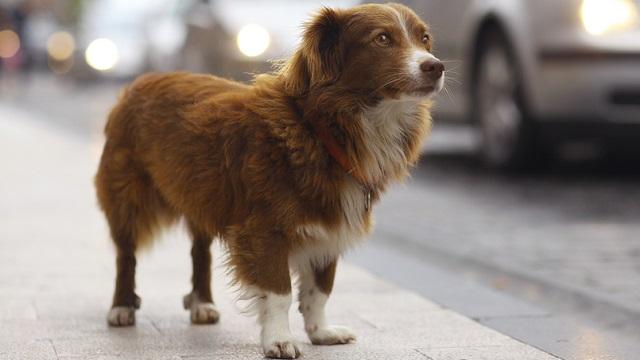 Lost dogs' statistics