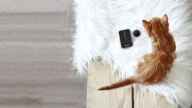 radio-tracker-how-does-a-pet-tracker-work
