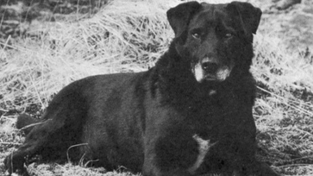 st johns water dog extinct dog breeds