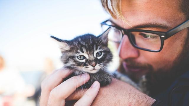 man-and-cat-mans-best-friend
