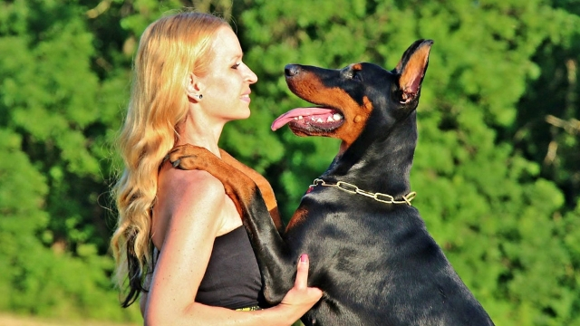 doberman pinscher easiest dogs to train