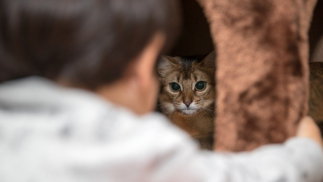Cats And Babies: Can They Co-Exist Peacefully?