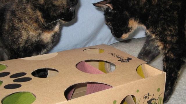 kibbles maze diy cat toys