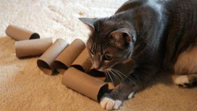rattling kibbles diy cat toys