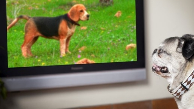 dogs leave tv on do dogs watch tv