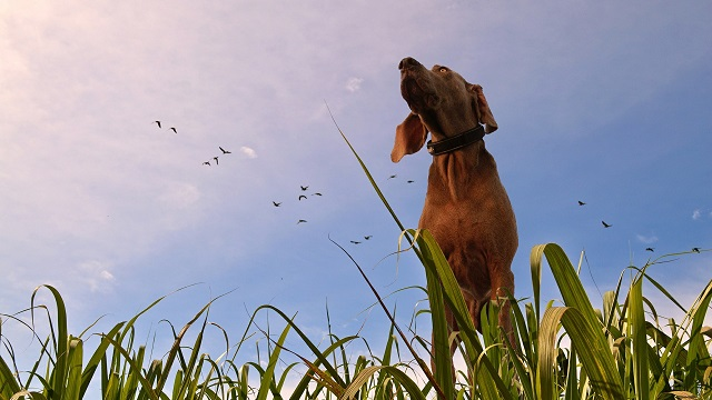 Intestinal Parasites in Dogs and Cats