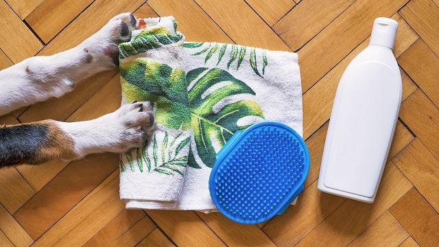 keeping your pet's coat healthy