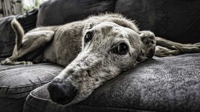 Supporting Your Ageing Dog: 3 Top Considerations