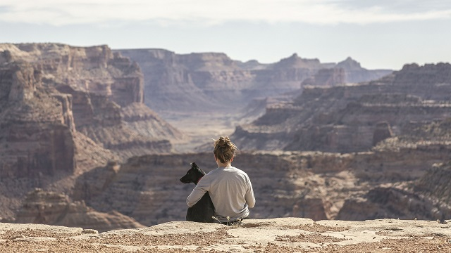 Dog Travel and COVID-19: What to Consider
