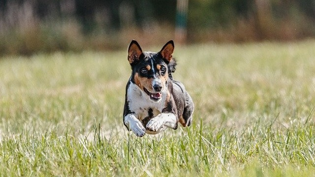 6 Easy Exercise Tips for Pets