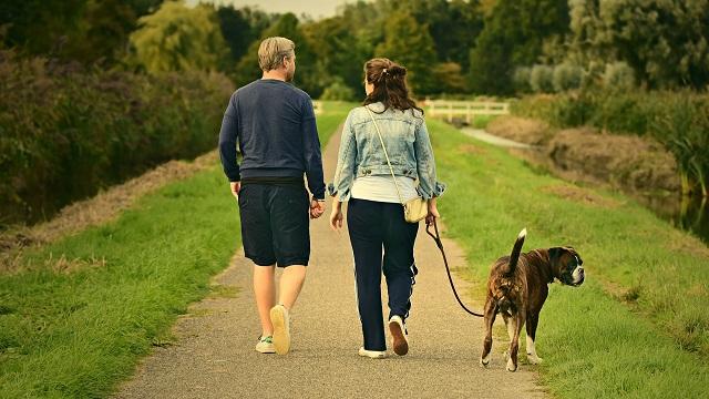 Dog Walking Safety Tips