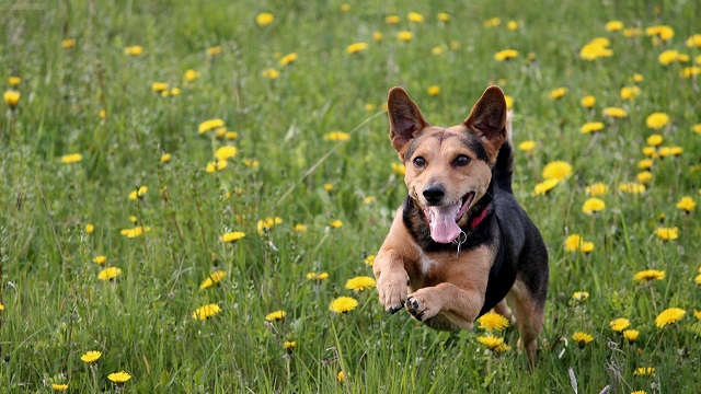 The Importance Of Regular Exercise For Dogs