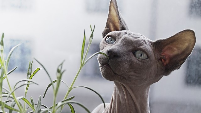 Hairless Cats: Everything You Need To Know