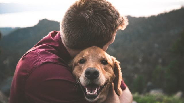 10 Heartfelt Dog Quotes That Will Make You Tear Up
