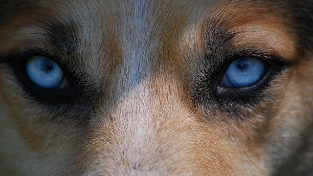 Common Dog Eye Problems: How To Identify Them