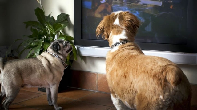 do dogs watch tv