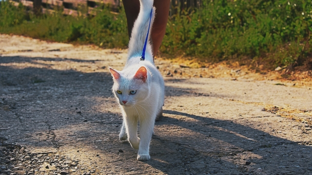 walking-cats