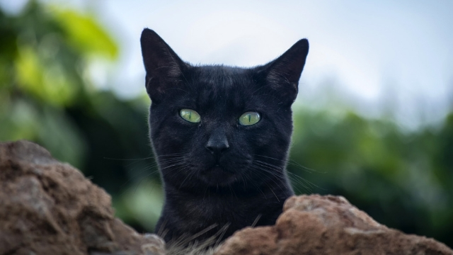 Are Cats Territorial? Can They Adapt Their Behavior?