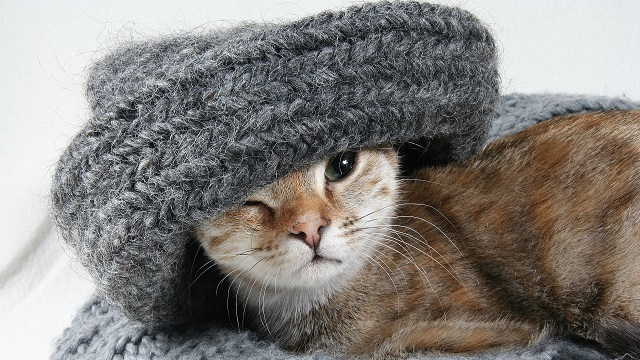 how to keep your pet warm house comfy