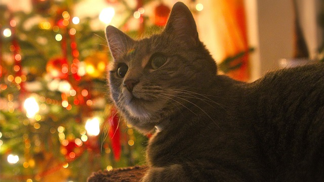 pet safety tips for christmas - feast is for humans only