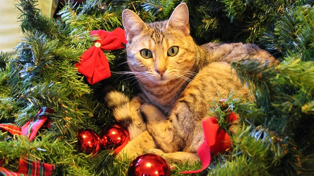 pet safety tips for christmas - keeping the tree in one piece