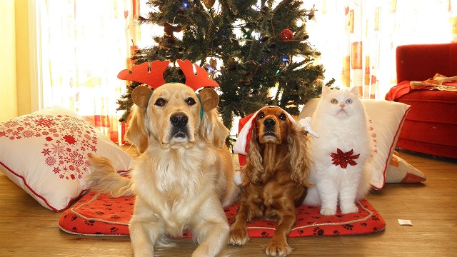 pet safety tips for christmas