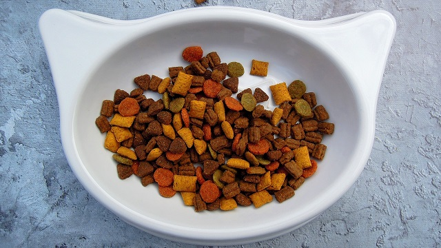 nutrition tips for pets - cat food