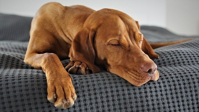 The Importance of Sleep for Dogs and Cats